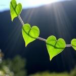 Аффирмации для настройки на успех и гармонию в жизни